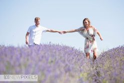 Hitching Lavender Field Photography