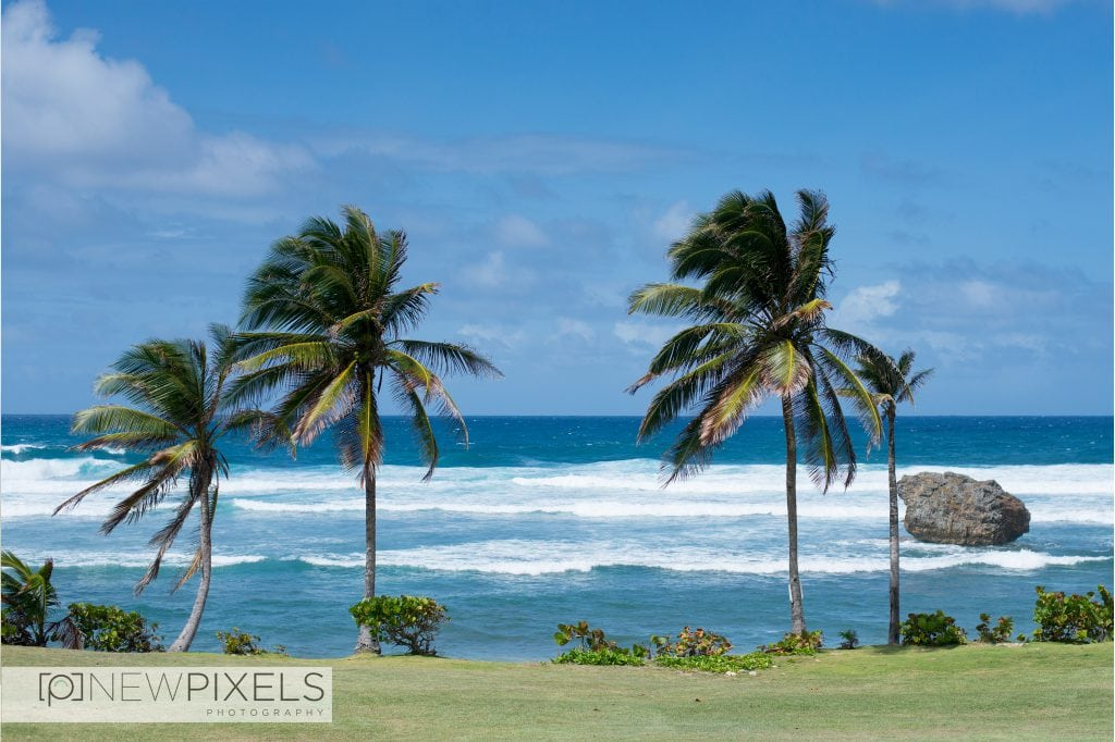Wedding_photographer_Barbados3